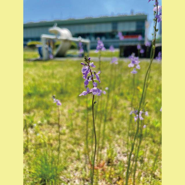 Bell-Flower20210513-2