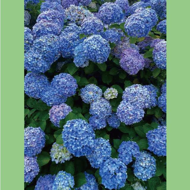 Bell-Flower20210701-07